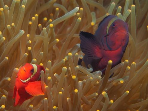 Sea Explorers Philippines